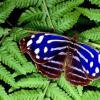 使用普通植物驱除家中的昆虫和虫子
