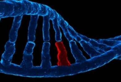 与寨卡相关出生缺陷严重程度相关的基因变异:什么是基因