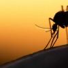 数学模型准确地预测了真实的疟疾爆发