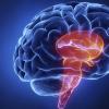 来自人体细胞的乳酸可能引发引起脑膜炎的细菌入侵的关键步骤