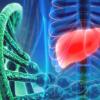 研究发现有四个基因与肝脏和肾脏的囊性疾病有关