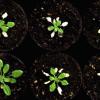 生物学家发现了防水植物的方法