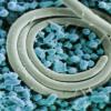 沙门氏菌食物中毒可能会损害您的DNA