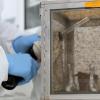 科学家们揭示了寨卡病毒如何导致小头畸形