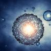 B细胞可能在黑素瘤的免疫治疗中发挥重要作用