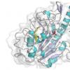 新的研究描述了细菌如何抵抗最后的抗生素