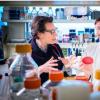 婴儿的长期感染显示出有助于细菌耐受抗生素的突变