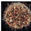 专家指出 下一次大流行可能会导致30多种感染