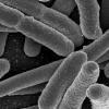 FDA最终确定抗微生物试验开发指南