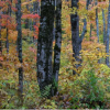 研究发现新罕布什尔州富含碳的管理森林