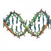 新研究发现基因组复制机的三维结构