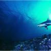 研究人员发现了在深海发光的袋装鲨鱼的新物种