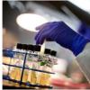 报告了更多的超级细菌前体病例 但没有传播