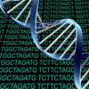 Zika的全基因组测序可以帮助解锁病毒的秘密