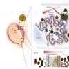研究人员绘制了寨卡到发育中胎儿的路线图