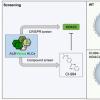 研究人员获得细胞生物学关键调控因子的3D结构快照