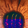 科学家逆转小鼠先天性失明