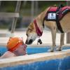 癫痫发作的气味确实存在 可以训练狗来发现它