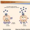 睡眠可提高人体免疫细胞与靶标结合的能力