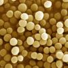 病原菌菌株之间的遗传变异有助于不同的患者免疫反应