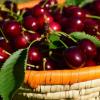 甜樱桃化合物可预防体重增加