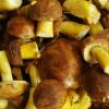 蘑菇中含有具有抗衰老潜力的强大抗氧化剂