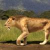 古代线粒体DNA揭示了佩剑齿猫的进化史