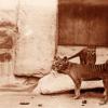 古代DNA研究为塔斯马尼亚虎的历史提供了新的亮点
