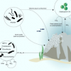 研究人员建造珊瑚礁的基因组序列及其微生物共生体