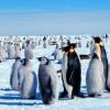 研究人员对所有活企鹅物种的基因组进行测序