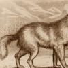 科学家对14300年前的狼幼犬进行RNA测序
