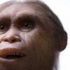 研究发现人类与四种灭绝的人种杂交