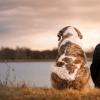 狗恋人可能是你的基因组成