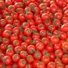 科学家组建了栽培番茄及其野生亲缘种的泛基因组