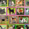 DNA研究揭示了狗品种的进化