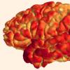 科学家发现免疫系统 记忆和大脑结构之间的联系