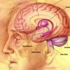 研究人员确定了负责大脑衰老的两个基因