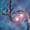 基因研究人员说 只有8.2%的人类DNA具有功能