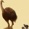 与马达加斯加象鸟紧密相关的猕猴桃