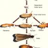 内华达州丹普伍德白蚁的科学家序列基因组