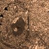 生物学家在噬菌体基因组中发现黑寡妇蜘蛛毒素的DNA