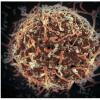 在埃博拉病毒中发现跟腱可能会导致未来的治疗