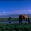 研究人员对700000岁马的基因组进行测序