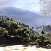 现代人类没有在多巴火山喷发74,000年之前定居亚洲