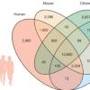 发现与人类惊人相似的斑马鱼基因组