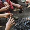 印度东北部的蝙蝠携带可以感染人类的丝状病毒