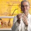 研究人员结合药物开发出一种新的人类副流感病毒治疗方法