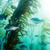 海藻类药物在中国被批准用于阿尔茨海默氏症