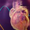 巨噬细胞中的TRIB1抑制可能是新的心血管疾病治疗目标