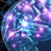 科学家得出哺乳动物大脑中连接的高分辨率视图